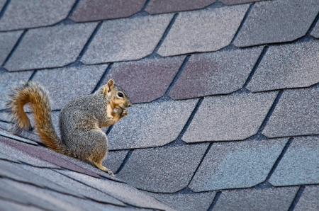 19364012 – squirrel sitting on the roof